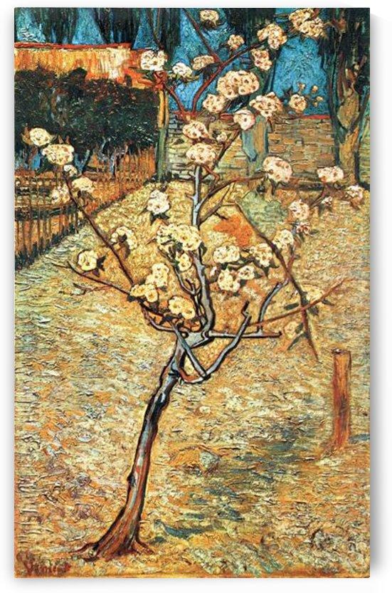 Flowering pear by Van Gogh by Van Gogh