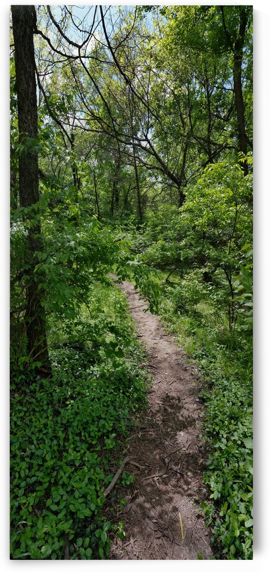 trail by Angelo A Keene
