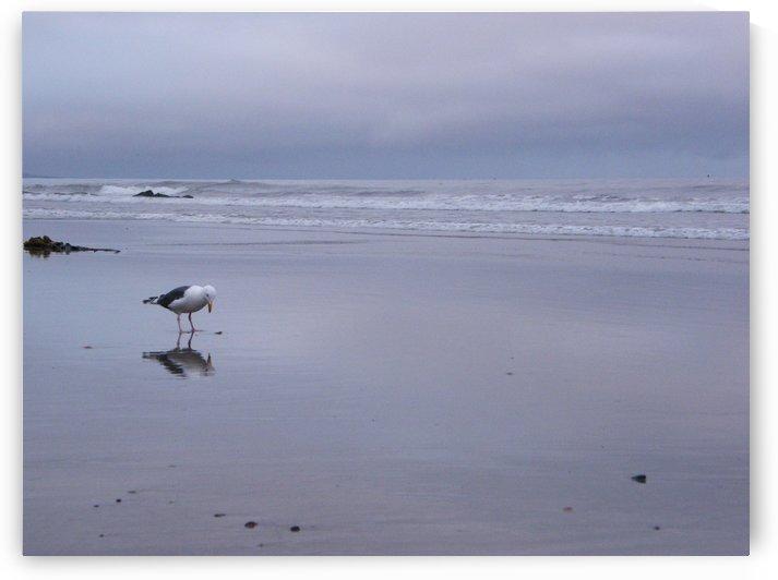 Morro Strand State Beach by Thomas Whitmore