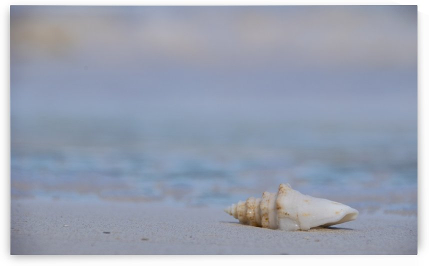 Sea Shell Tulum by Mr  Rivera