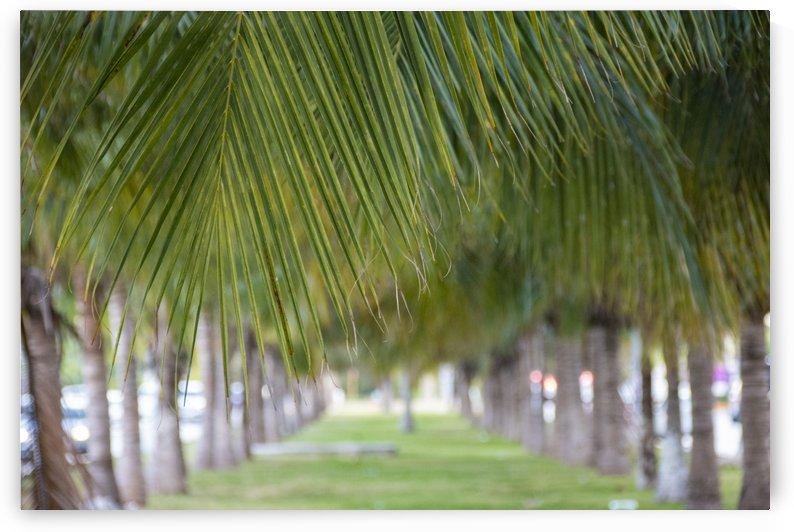 Palm trees by Mr  Rivera