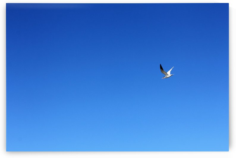 In Flight by Stan Bann