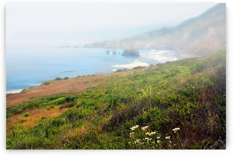 Coastal Views Fog by Frank Wilson