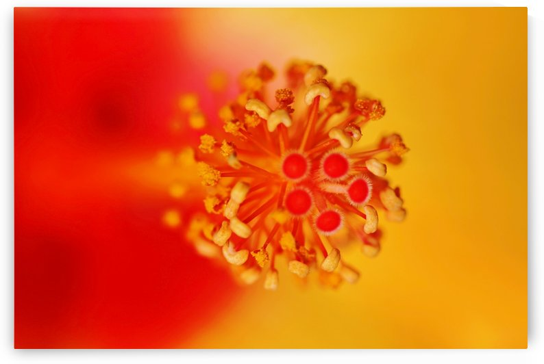 Hibiscus Heart by Deb Oppermann