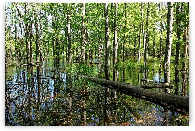 Wild Goose Woods Pond II by Deb Oppermann