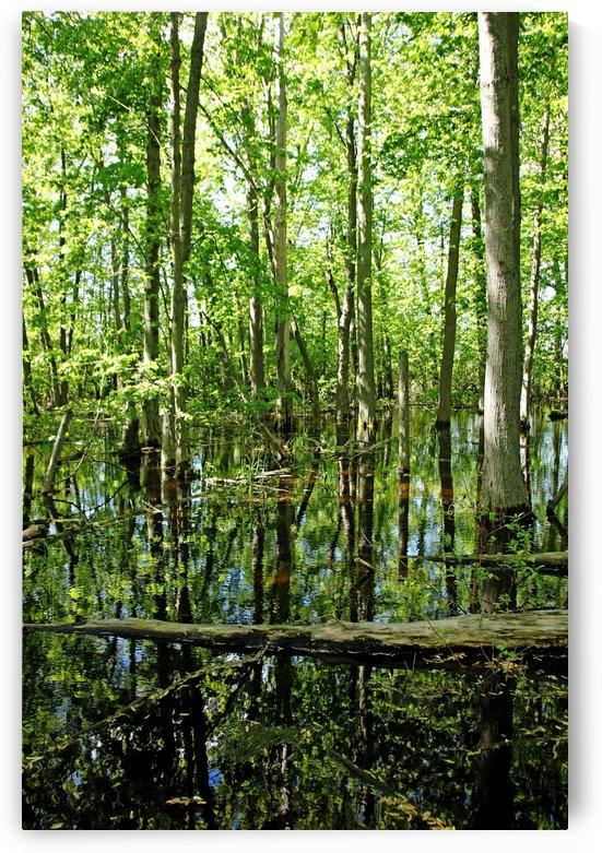 Wild Goose Woods Pond VII by Deb Oppermann