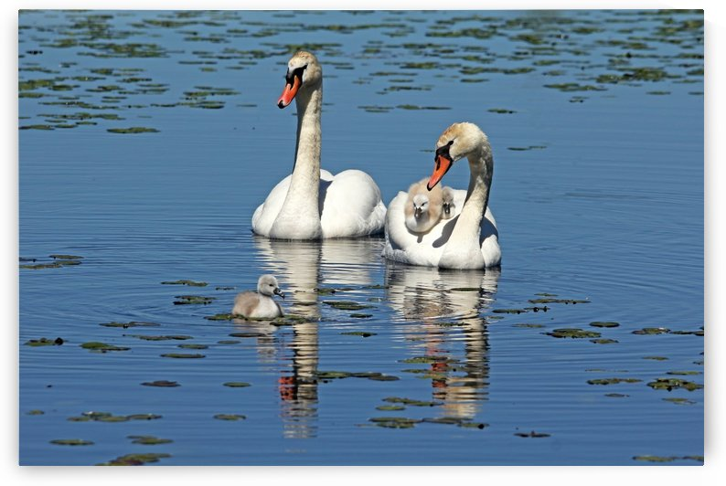 Proud Parents by Deb Oppermann