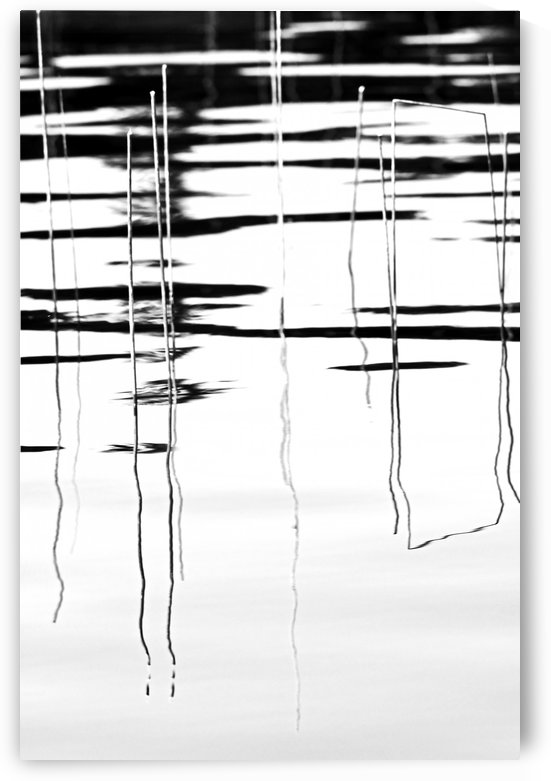 Light  And Shadow Reeds Abstract by Deb Oppermann