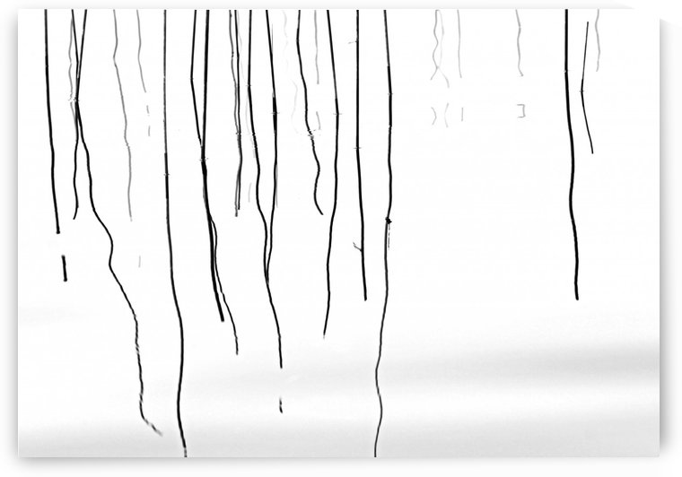 Water Reeds Abstract Black And White by Deb Oppermann
