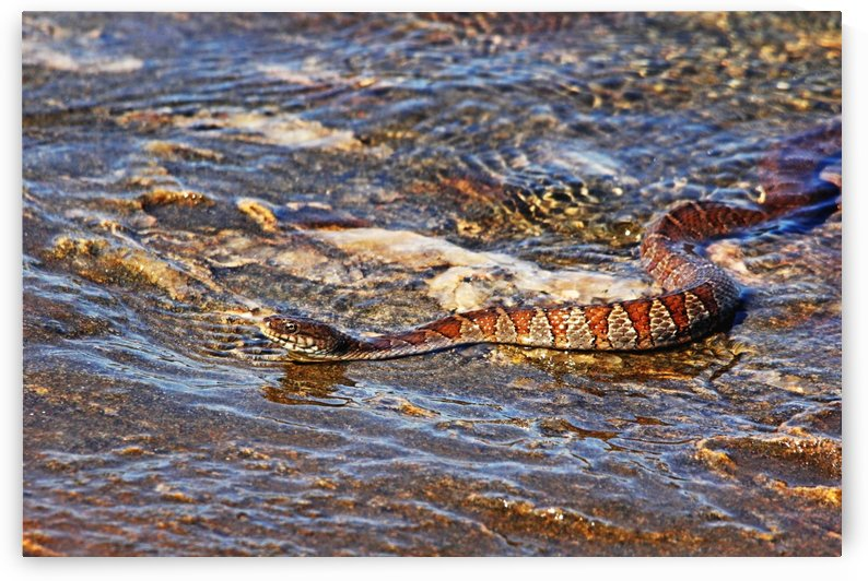 Slithering Along The Shore by Deb Oppermann