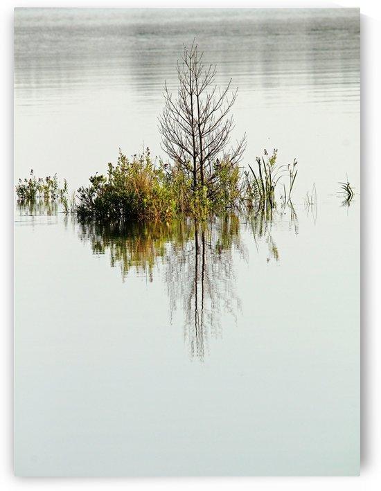 Simple Pleasure by Deb Oppermann