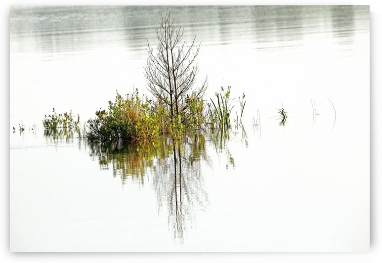 Simply Nature by Deb Oppermann