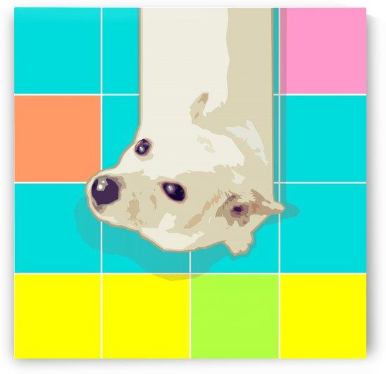 White Puppy on Geometric Floor by zelko radic bfvrp
