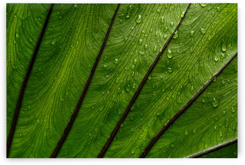 Close-up view of leaf and rain drops by Krit of Studio OMG