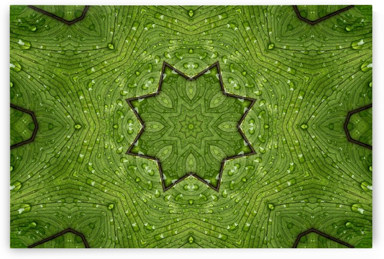 kaleidoscope images of leaf and water drops by Krit of Studio OMG