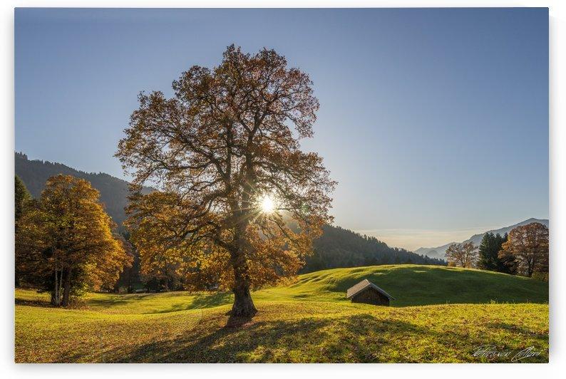 Autumn Tree by Patrice von Collani