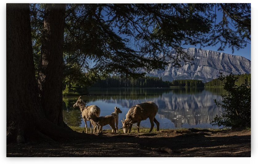 Lakeside  by Robert R  Grove
