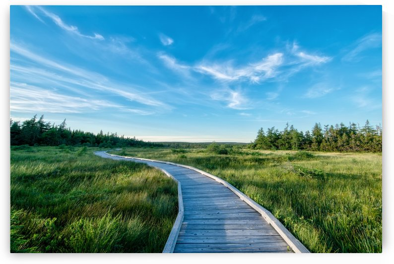 A walk at the Bog by Michel Soucy