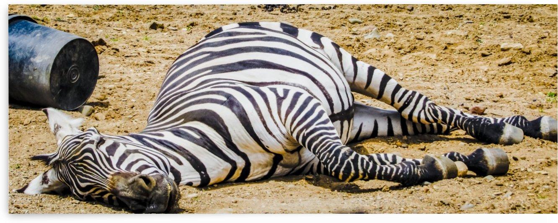 Lazy Zebra by Leora J Busch