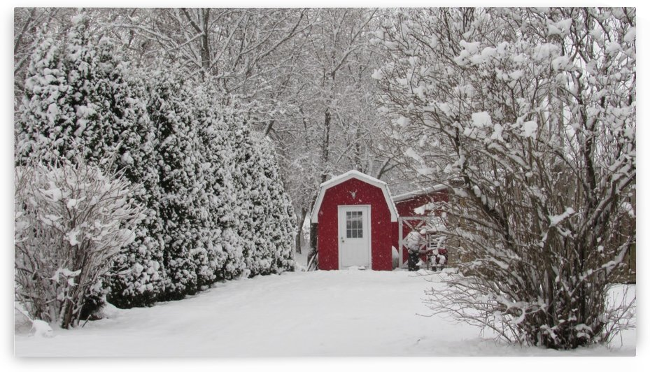 Red Shed by Leora J Busch