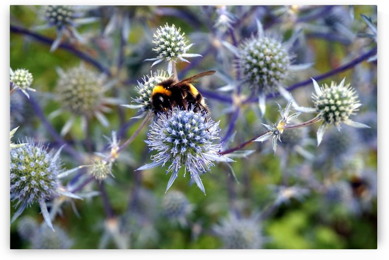 Bumble Bee Flower by Nyvelius