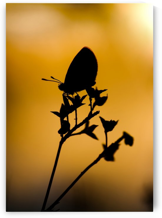 Silhouette of butterfly on flower by Krit of Studio OMG