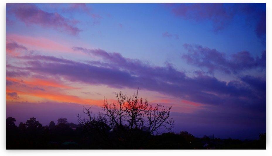 Morning Glory by Viraj S Nair