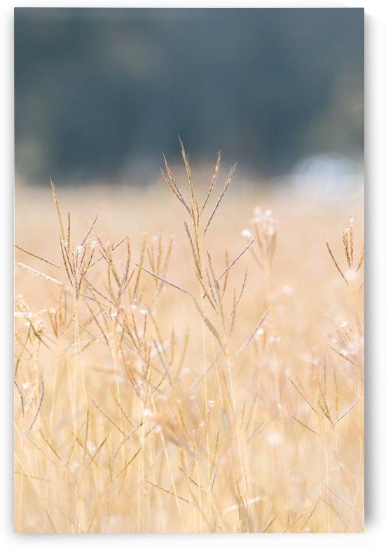 Died grass in field by Krit of Studio OMG