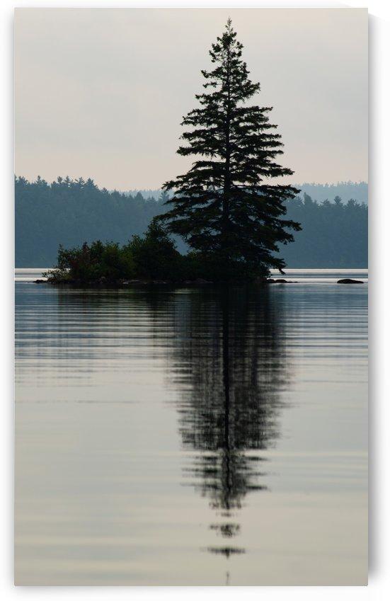 Lonely Tree by Darren LeBlanc