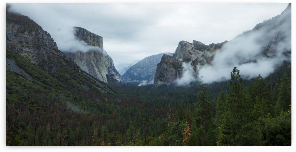 Morning Fog Over Yosemite by Joshua Robinson