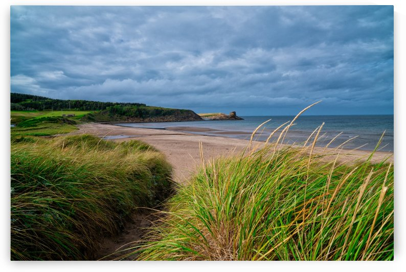 Sand and Grass by Michel Soucy