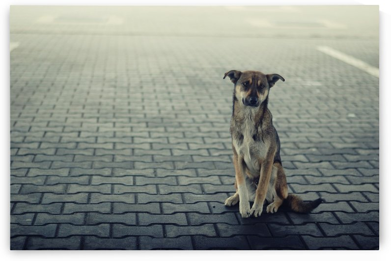 Lonely dog by Tanya Photography