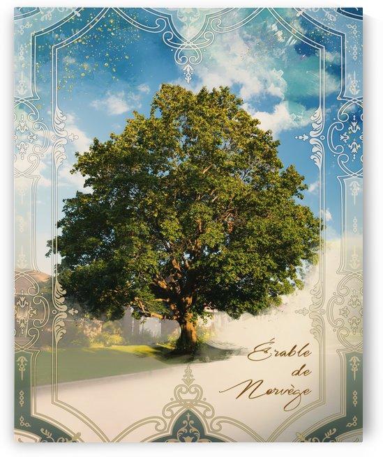 Norwegian Maple Tree by Audrey-Anne Richard