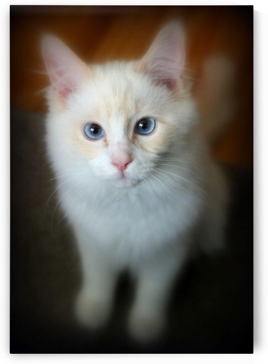 chat beauté by romain
