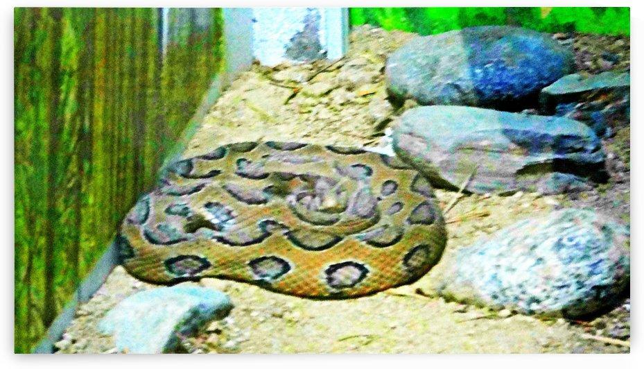Python by Nilu Mishra