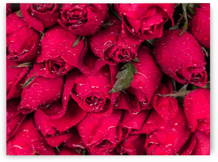 Red Roses on display by Asia Visions Photography