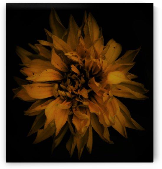 late bloom by Anu Hamburg