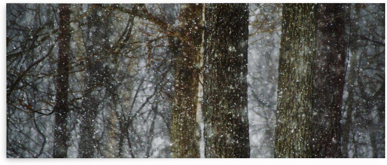 snowfall by Anu Hamburg