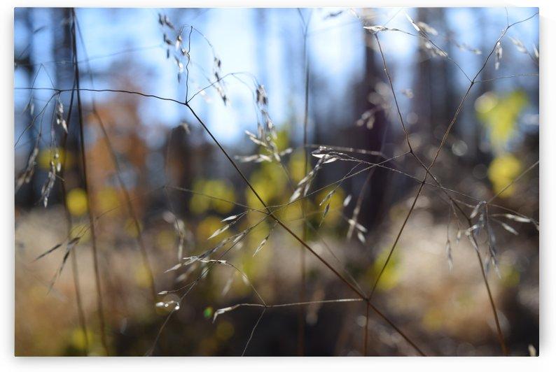 in the grass by Anu Hamburg