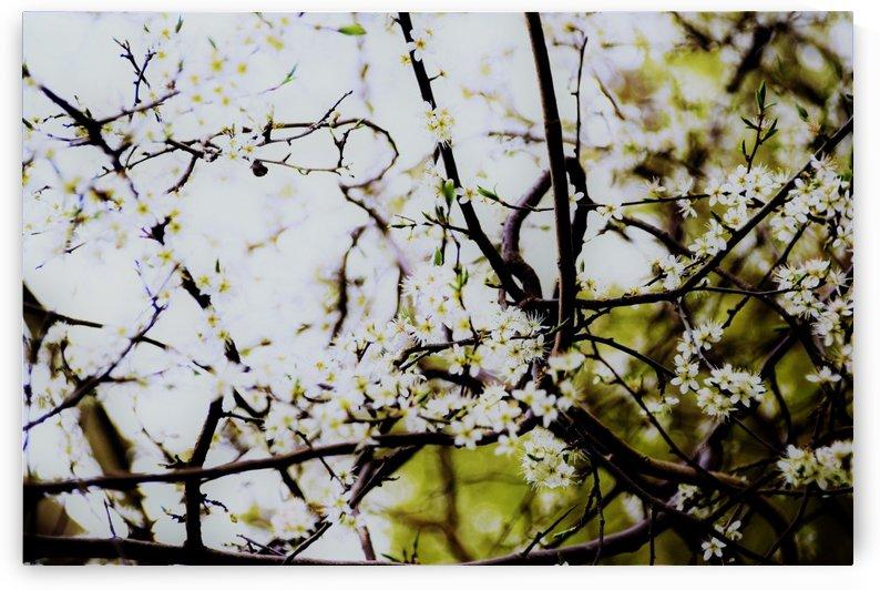 beauty of spring by Anu Hamburg