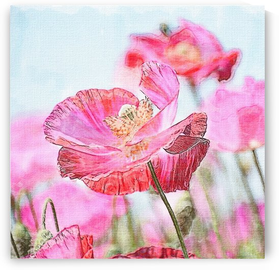WILD POPPYS by ART AND INSPIRATION