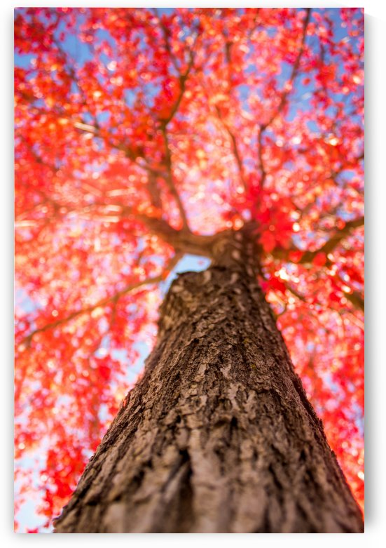 THE RED TREE by ART AND INSPIRATION