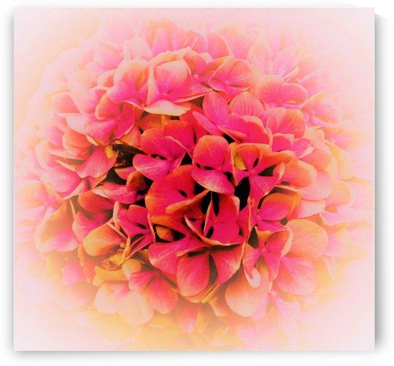 paint it pink 2 by Anu Hamburg