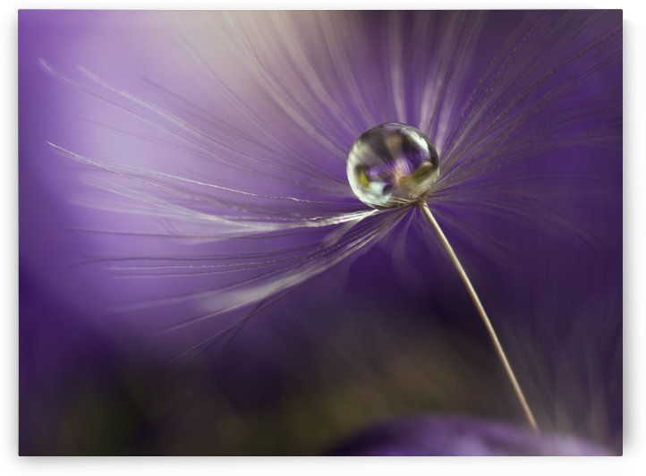 In shades of purple by 1x