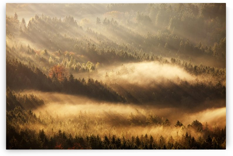 Autumn Rays by 1x