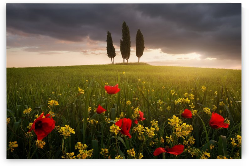 Blooming Tuscany by 1x