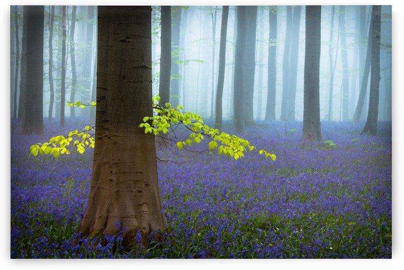 Spring........... by 1x