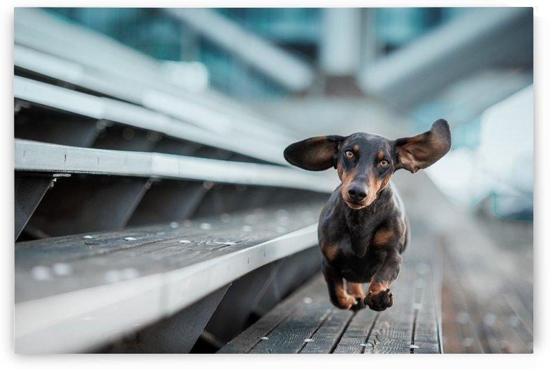 Ein kleiner Hund lA¤uft durch die Welt.... by 1x