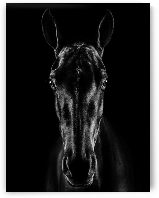 The Horse in Noir by 1x