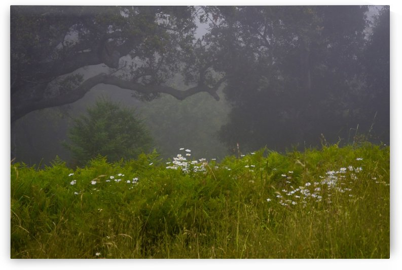 Wildflowers in the Fog by Robin Buckley